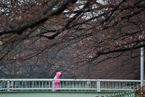 雨桜1-9