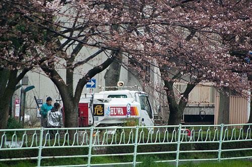 雨桜2-7