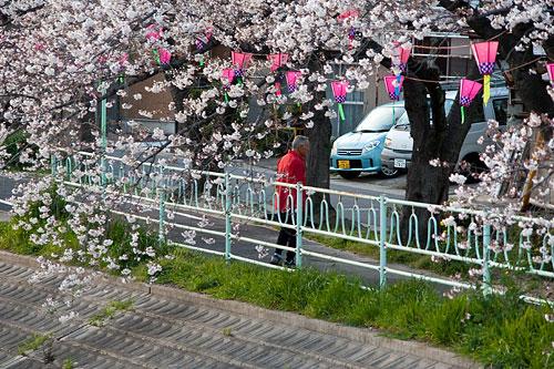 桜中間-11