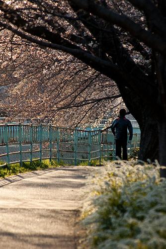 桜中間-4
