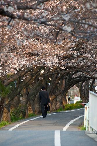 桜中間-7