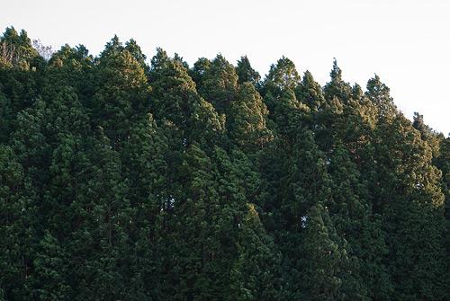 海上の森3-10