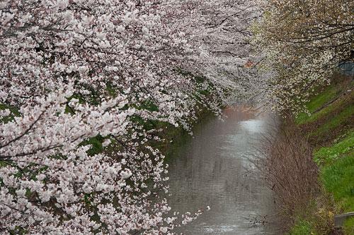 香流川から黒川-6