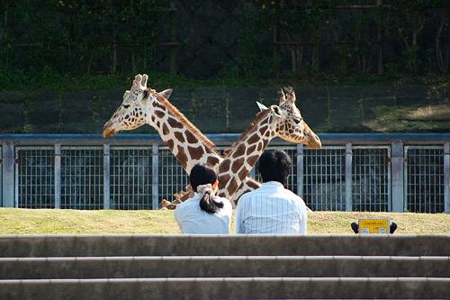 東山動物園1-1