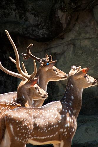 東山動物園2-9