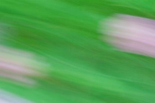 小幡緑地東園-10