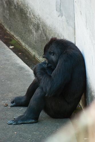 東山動物園夏1-11