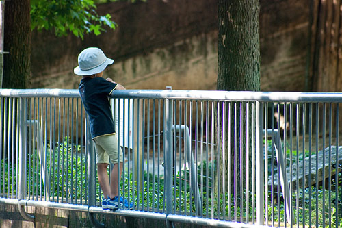 東山動物園夏1-14
