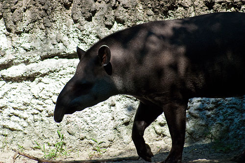 東山動物園夏2-1
