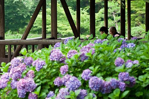 7月の植物園2-5