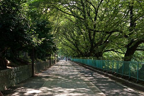 名古屋城帰り道-1