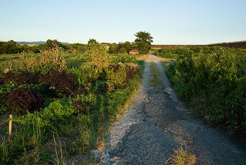 一色農道風景