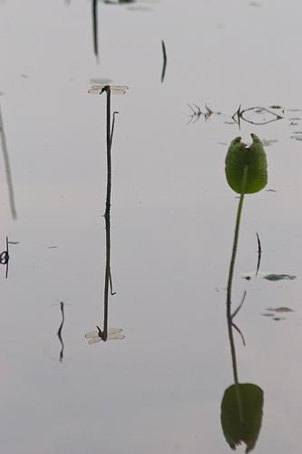 牧野ヶ池-1