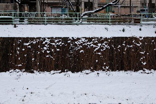 雪降り-13