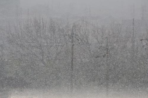 雪降り-6