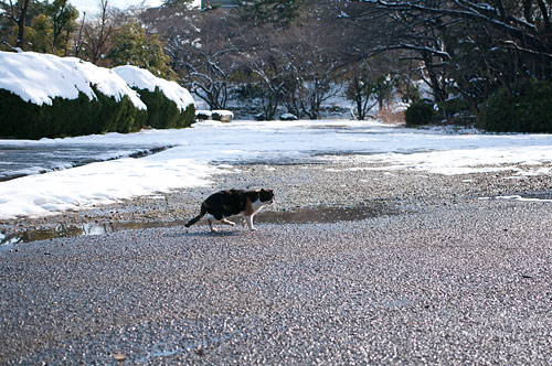 雪の名古屋城1-4