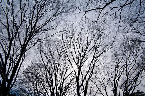 雪の名古屋城1-6