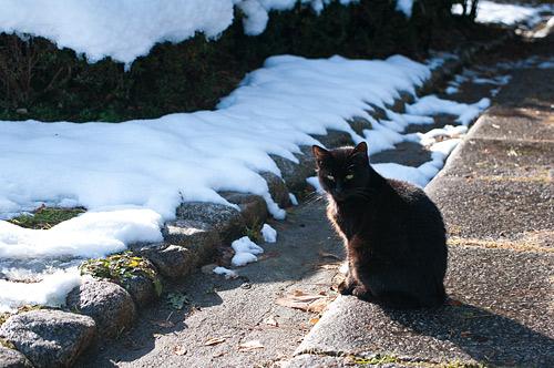 雪の名古屋城2-4