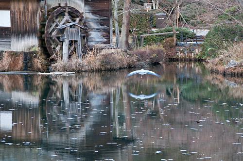 東山動物園-12