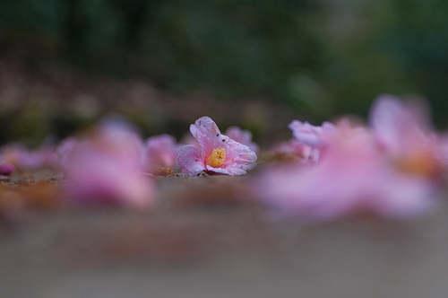 東山植物園-1
