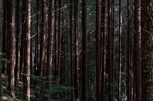 海上の森3月-1