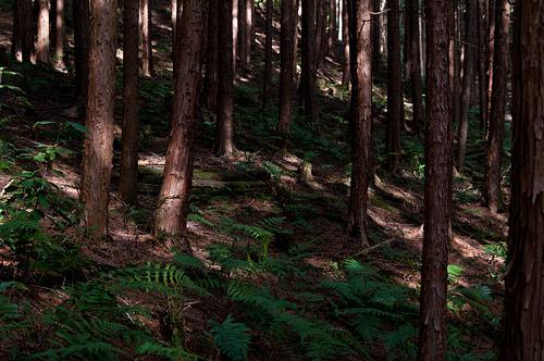 海上の森3月-2
