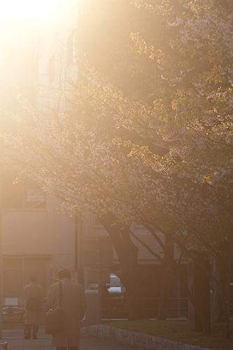 市政資料館桜-13