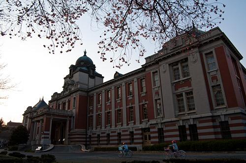 市政資料館桜-15
