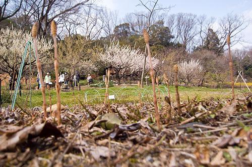 東山植物園春1-1