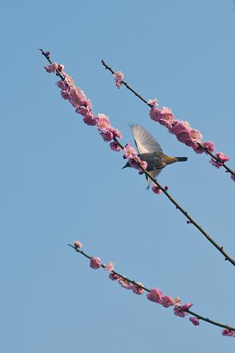 東山植物園春1-15