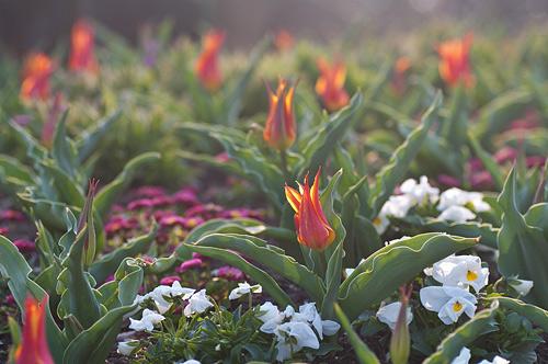 東山植物園春1-16