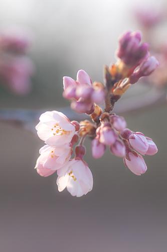 東山植物園春1-2