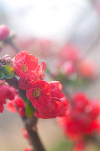 東山植物園春1-3