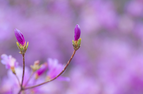 東山植物園春1-5