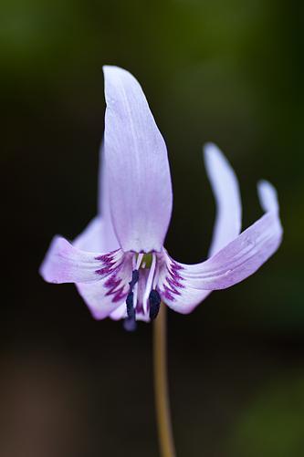 東山植物園春1-8