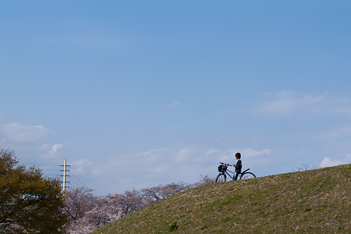 桜便り6-15