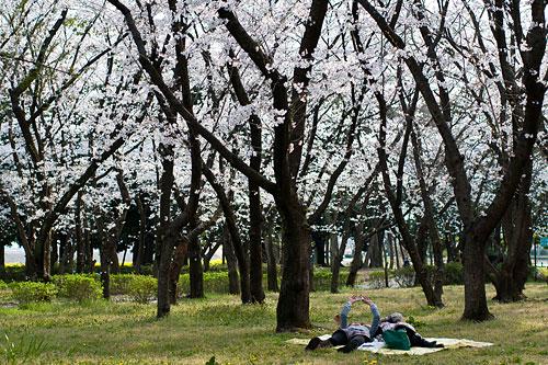 桜便り6-18