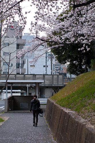 桜便り8-2