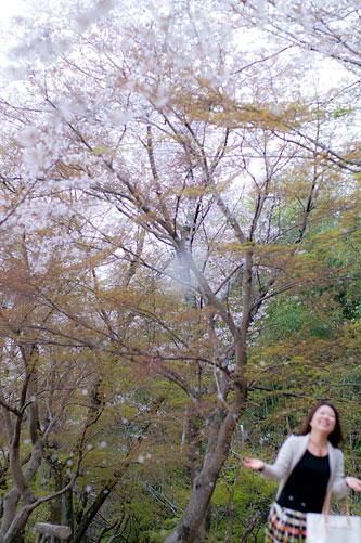 桜便り8-9