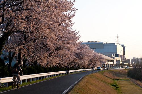 桜便り9-12