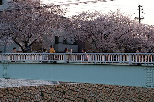 桜便り9-14