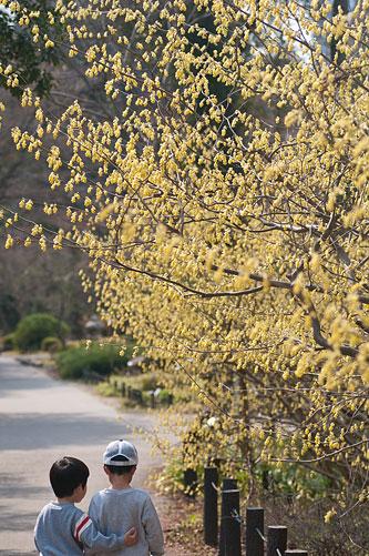 東山植物園春2-1