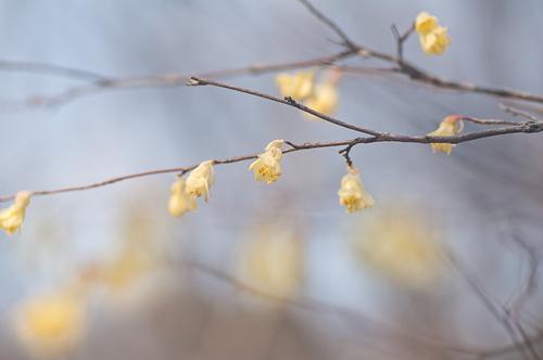 東山植物園春2-10