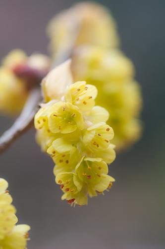 東山植物園春2-11