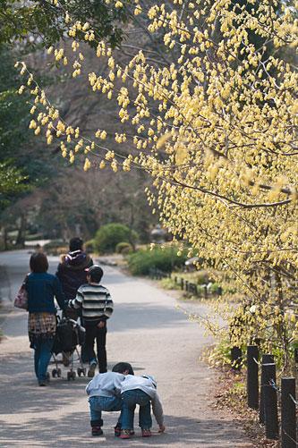 東山植物園春2-2