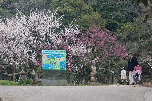 東山植物園春2-3