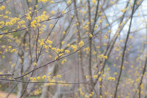 東山植物園春2-9