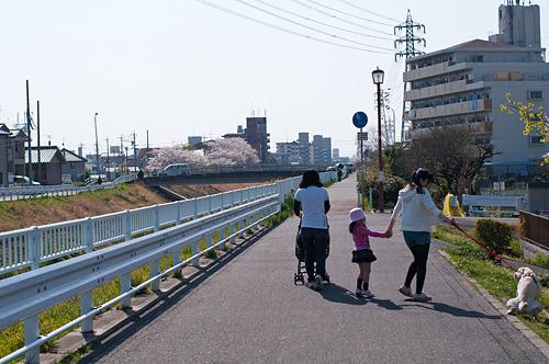 桜便り14-9