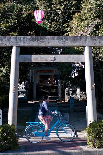 近所桜1-3