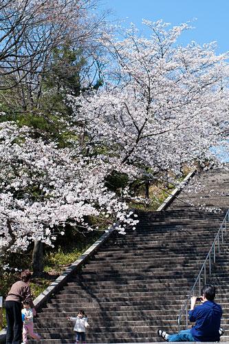 桜便り2-3